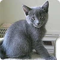 Adopt A Pet :: Dex - Irvine, CA
