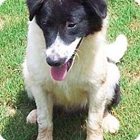 Adopt A Pet :: Davis - Wakefield, RI
