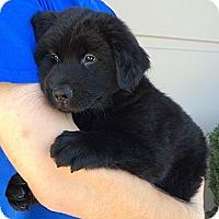 Adopt A Pet :: Brandon - Phoenix, AZ
