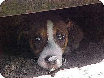 Terrier (Unknown Type, Medium) Mix Dog for adoption in Old Town, Florida - Karen