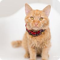 Adopt A Pet :: Hamster - Addison, IL