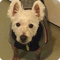 Adopt A Pet :: Scruffy - Prole, IA