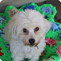 Adopt A Pet :: Gala - Phoenix, AZ