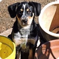 Adopt A Pet :: Finn - Bedford, TX