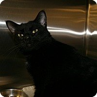 Adopt A Pet :: Jetta - Roanoke, VA
