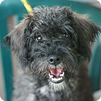 Adopt A Pet :: Easton - Canoga Park, CA