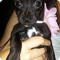 Adopt A Pet :: Emilia - Austin, TX
