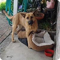 Adopt A Pet :: Brandy - Lodi, CA