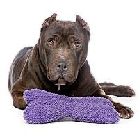Adopt A Pet :: Boyo - Los Angeles, CA