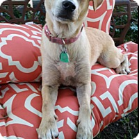Adopt A Pet :: Hope - Cat Spring, TX