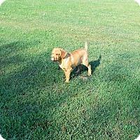 Adopt A Pet :: Dapper Dan - Aurora, CO