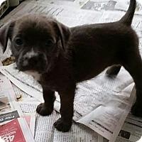 Adopt A Pet :: Ella - Weeki Wachee, FL