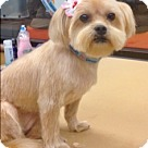 Adopt A Pet :: Golden Delicious (aka Goldie) (Has application)