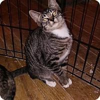 Adopt A Pet :: Doyle - Alamo, CA
