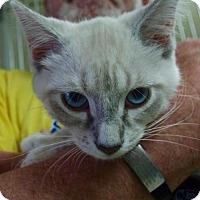 Adopt A Pet :: Nami - Nashville, IN