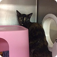Adopt A Pet :: Rosalind - Janesville, WI