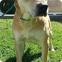 Adopt A Pet :: P.J - Visalia, CA