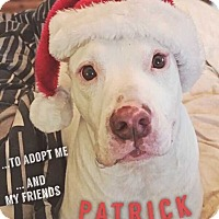 Pit Bull Terrier Mix Dog for adoption in Allen, Texas - Patrick