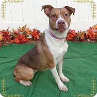 Hound (Unknown Type) Mix Dog for adoption in Marietta, Georgia - CASSIE