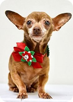 Chihuahua Mix Dog for adoption in Dublin, California - Buffy
