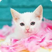 Adopt A Pet :: Celeste - Fort Lauderdale, FL