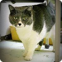 Adopt A Pet :: BeBe - Casa Grande, AZ