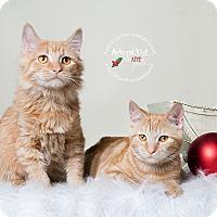 Adopt A Pet :: Stella and KiKi - Apache Junction, AZ