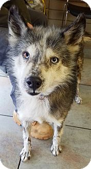 Husky Mix Dog for adoption in Kingston, Tennessee - Wiley