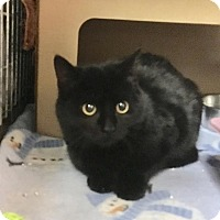 Adopt A Pet :: Stella - East Brunswick, NJ