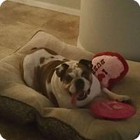 Adopt A Pet :: Miss Piggy - Odessa, FL