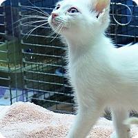Adopt A Pet :: Arctica - Gonzales, TX