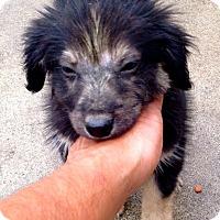 "Adopt A Pet :: Kendrick Lamar ""Flash"" Compton - Corona, CA"