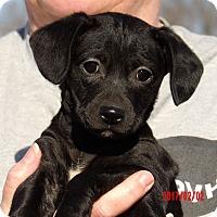 Adopt A Pet :: Yumi (6 lb) Video! - Sussex, NJ