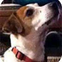 Adopt A Pet :: Jake 3 - Rhinebeck, NY