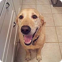 Adopt A Pet :: Zach - Foster, RI