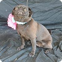 Adopt A Pet :: Holly - Plano, TX