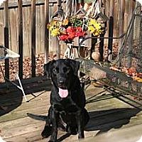Adopt A Pet :: Luke - Tunbridge, VT