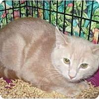 Adopt A Pet :: Richard - Colmar, PA