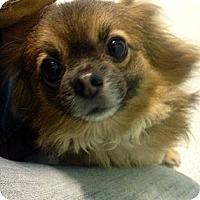 Adopt A Pet :: Patrick - Muskegon, MI