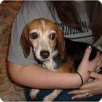 Adopt A Pet :: Jessie Marie - Eden, NC