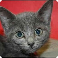 Adopt A Pet :: MARGE - SILVER SPRING, MD
