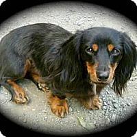 Adopt A Pet :: LINK - Portland, OR