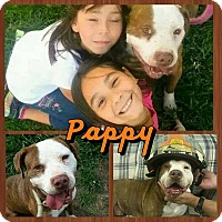 Adopt A Pet :: Pappy - Houston, TX