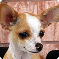 Adopt A Pet :: Rudy - Bridgeton, MO