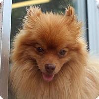 Adopt A Pet :: Aslan - Atlanta, GA
