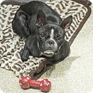 Adopt A Pet :: Joan