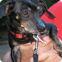 Adopt A Pet :: Dolly - Salem, OR