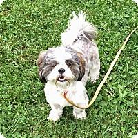 Adopt A Pet :: Kaori - Homer Glen, IL