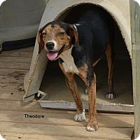 Adopt A Pet :: Theodore - Charlemont, MA