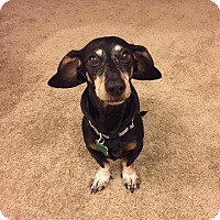 Adopt A Pet :: Inky - Henderson, NV